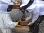 Bienenpatentreffen