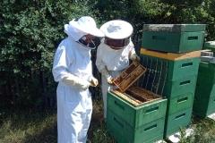Arbeiten am Volk + Königinnengitter + Honigraum
