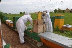 Bienen-abkehren